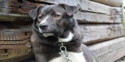 تعبیر خواب دیدن سگ سیاه و سفید که پارس می کند چیست